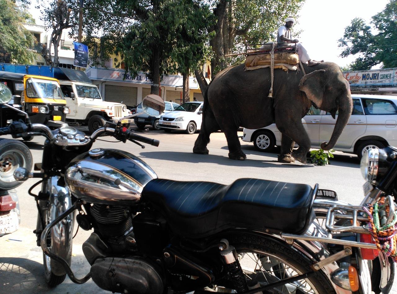 Primer objetivo cumplido: Tour leader en Rajasthan