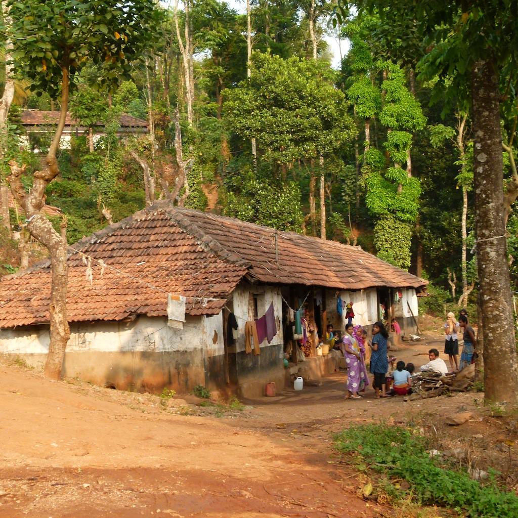 plantación de café con casa rural