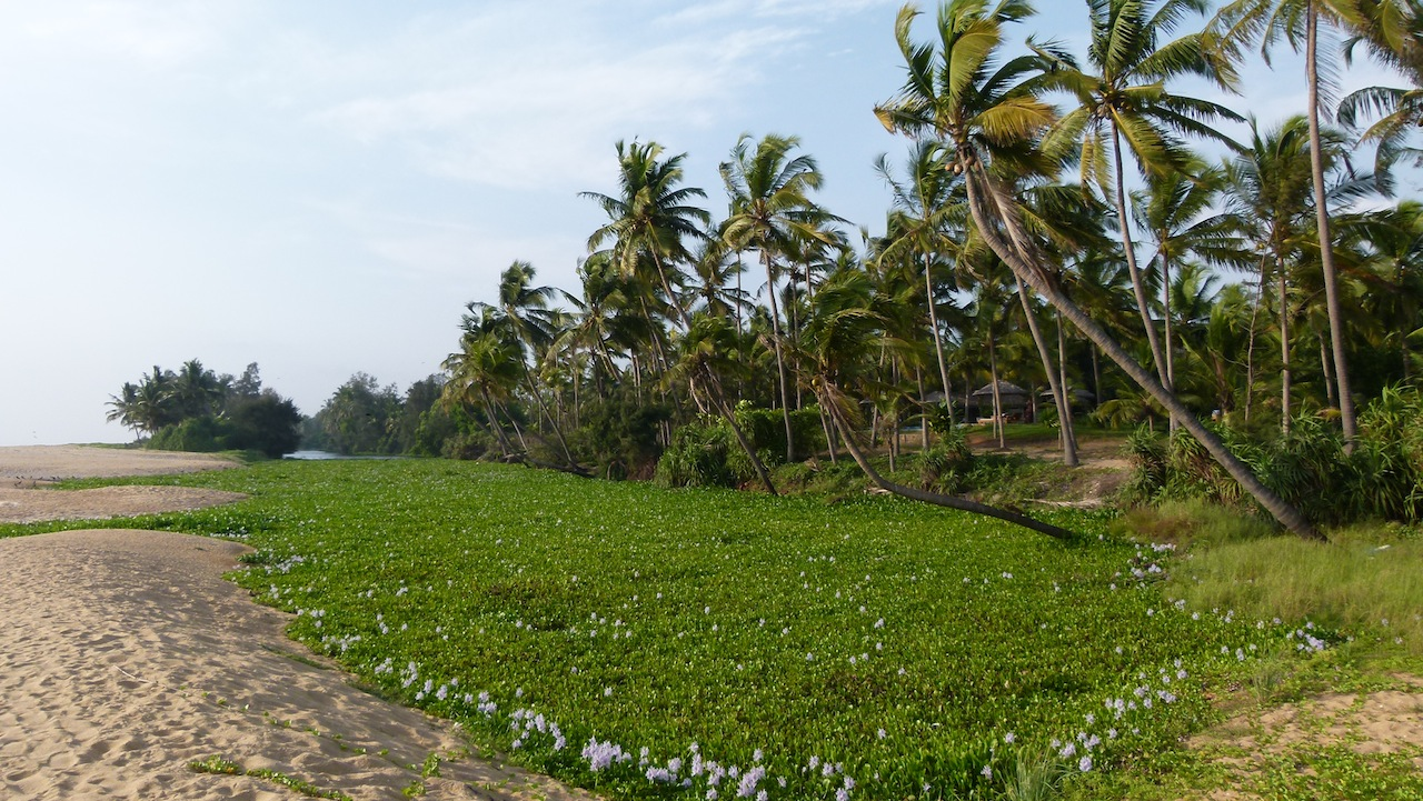 The Neeleshwar Hermitage, empieza bien Kerala
