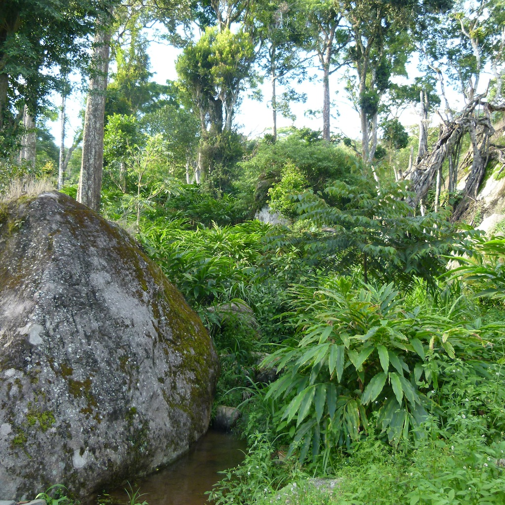 Viajar a India: Plantación de cardamomo en Munnar