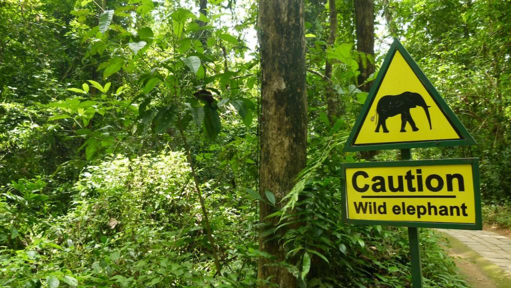 Kerala, el río Periyar y sus elefantes