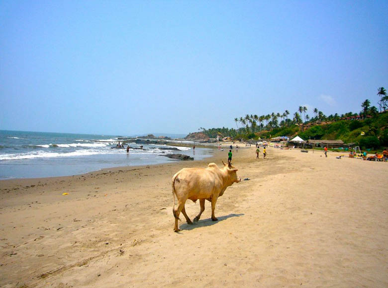 Viaje de Retiro en India, Goa y el triángulo de Oro (26 de Noviembre)