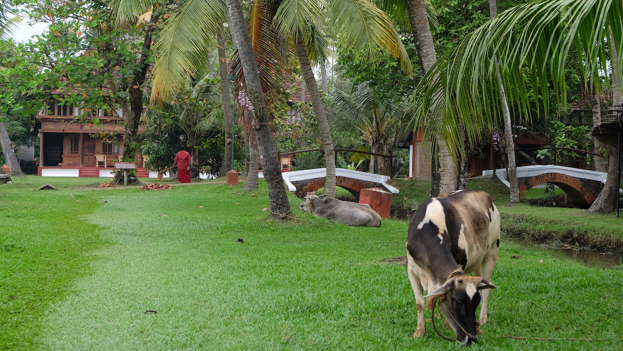 Coconut Lagoon, Backwater en Kerala
