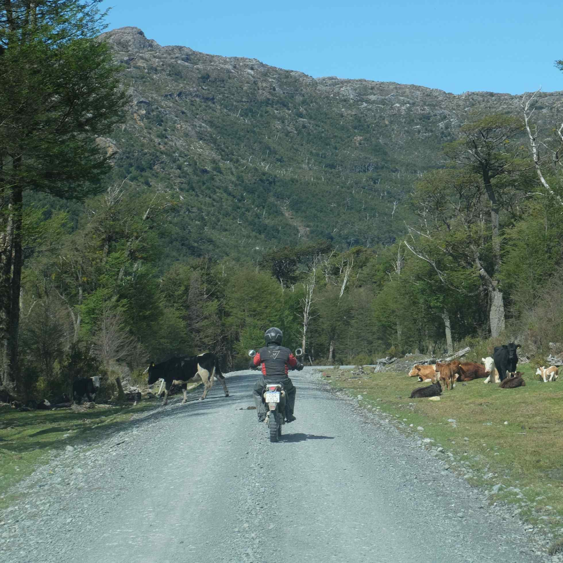 Carretera Austral @Enduro Austral