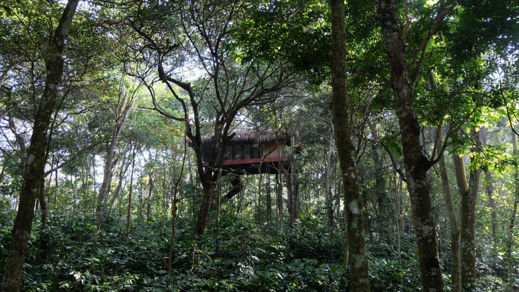 Casa árbol en Kerala